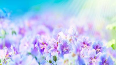 Обои на рабочий стол яркие цветы