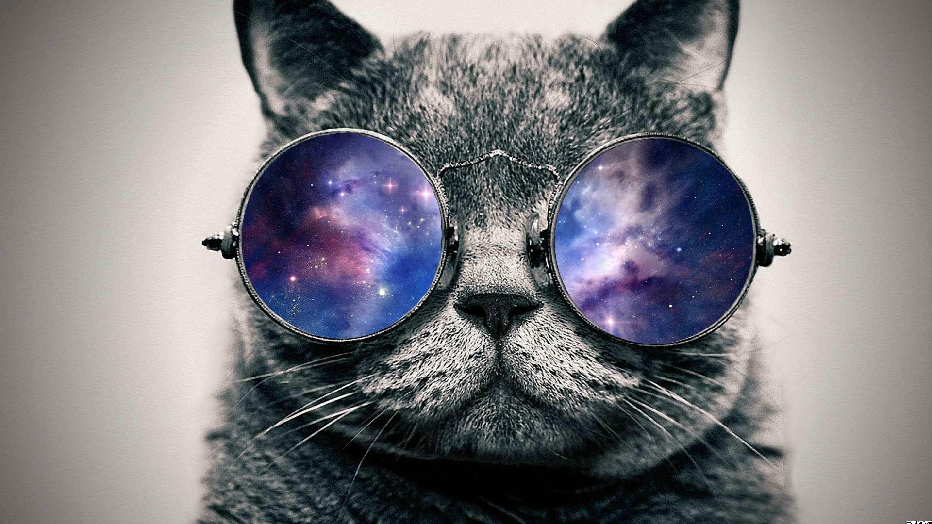 cat definition psychology