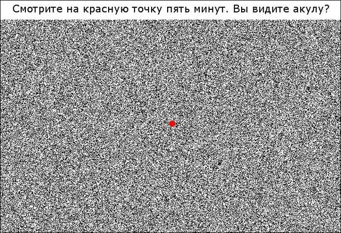 сколько кругов на картинке ответ всех они есть