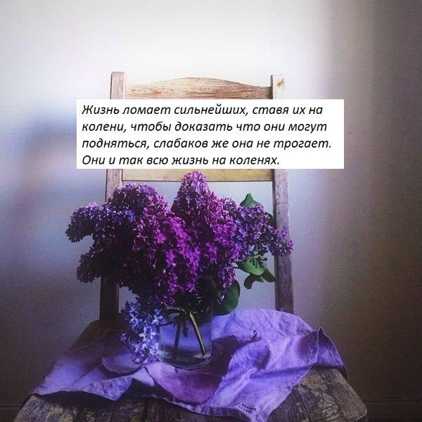 современным способом цитаты про розу для инстаграмма под фото работать