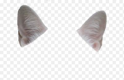 Cat Ear Png