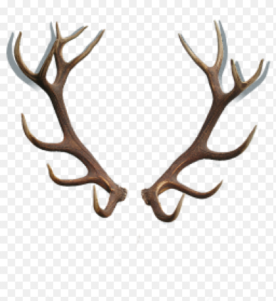 Картинки оленьи рога