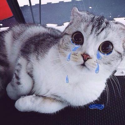 котик плачет фото