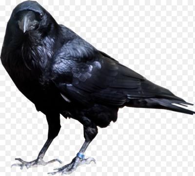 Картинки по запросу черный ворон пнг