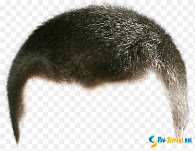 Скачать шаблоны волосы для фотошопа