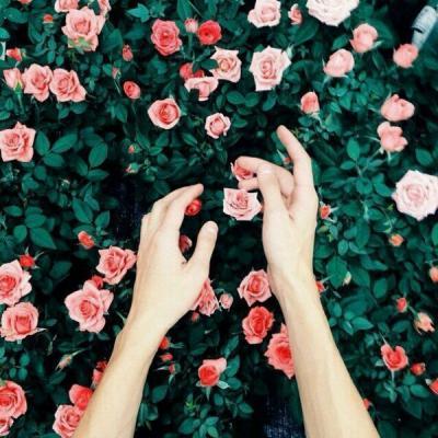 Flower Garden Wallpapers  Full HD wallpaper search