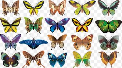 Фото много бабочек
