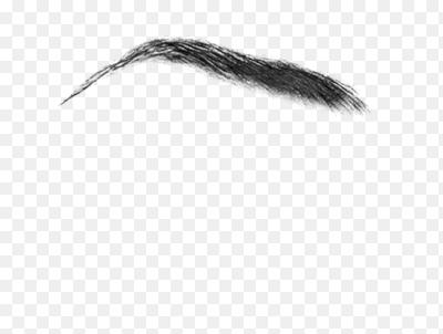 Eyebrow texture png