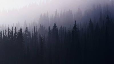 Обои лес туман на рабочий стол