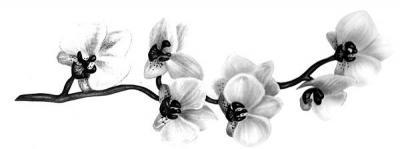 Татуировка орхидея черная