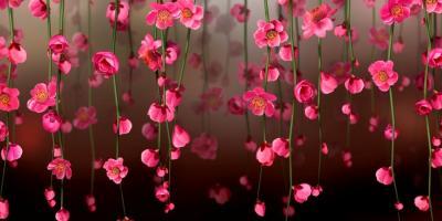 Фоны для фотошопа цветы