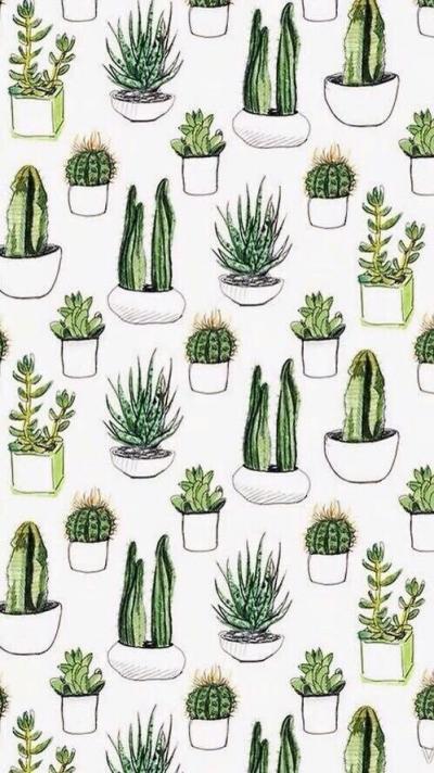 кактусы тумблер картинки