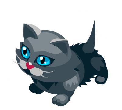 Кот из тропикании