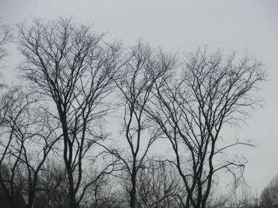 golie-derevya-zimoy