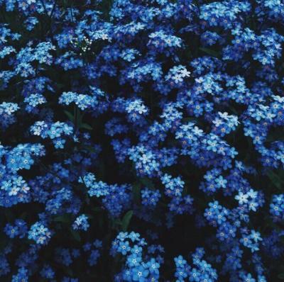 цветы картинки синие