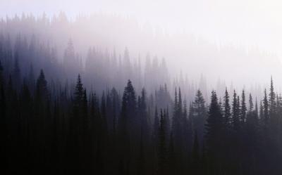 картинки тёмный лес