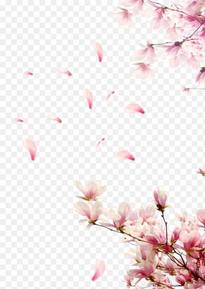 Цветы лепестки png