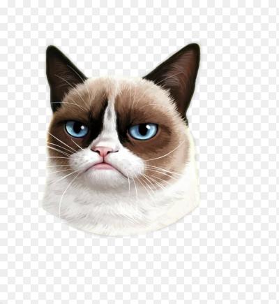 Картинки по запросу Соус Тардар (Grumpy Cat) пнг