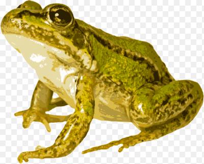 Открыток, лягушка картинки на прозрачном фоне