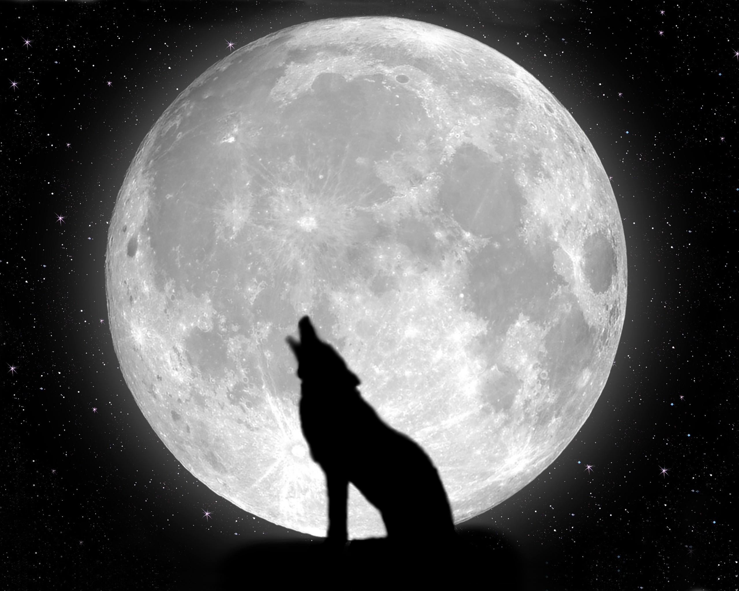 Картинки с полной луной и волком