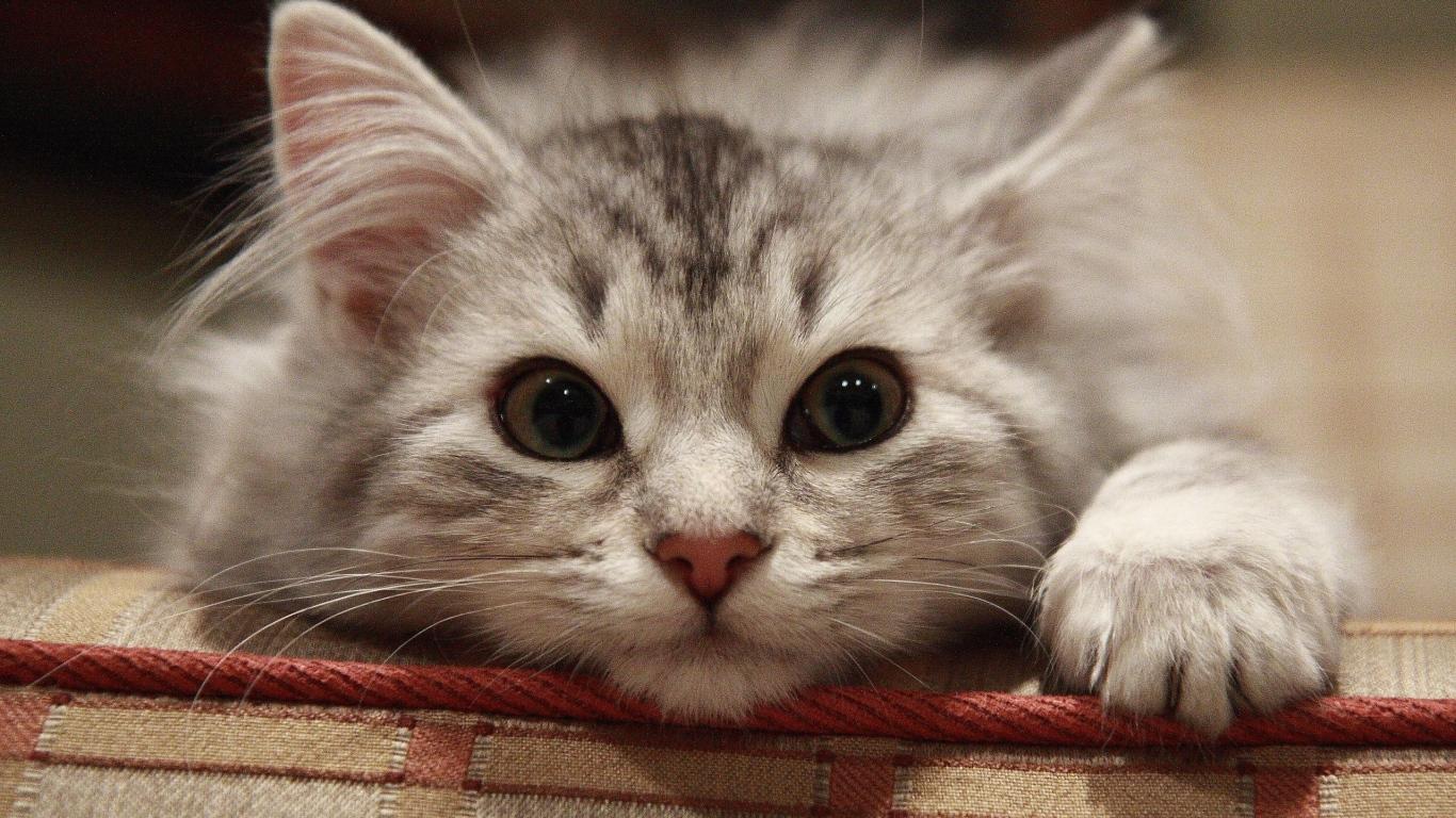 Марта, котенок картинки для рабочего стола прикольные