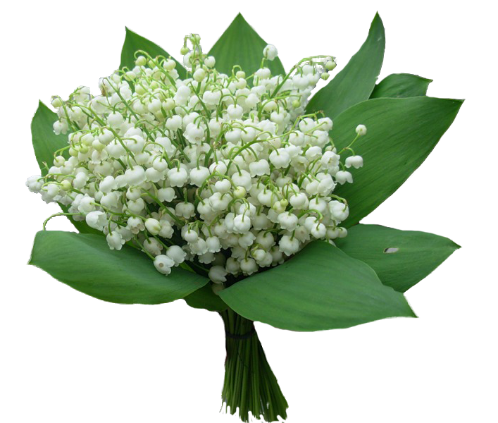 Цветы с доставкой, ландыш, москва, невесты цвета фуксии