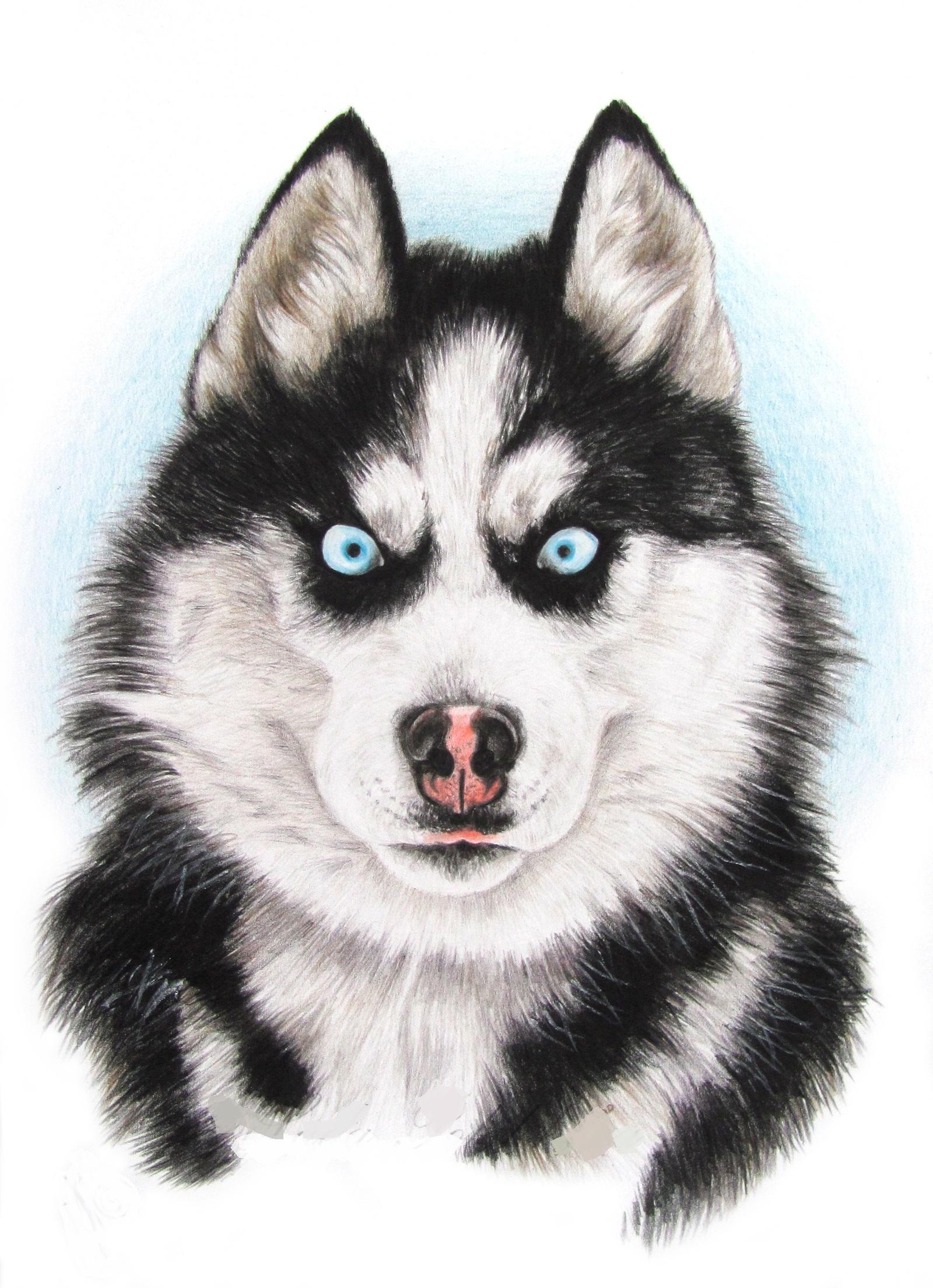 отличаются нарисовать рисунок собаки хаски милованов замечательно