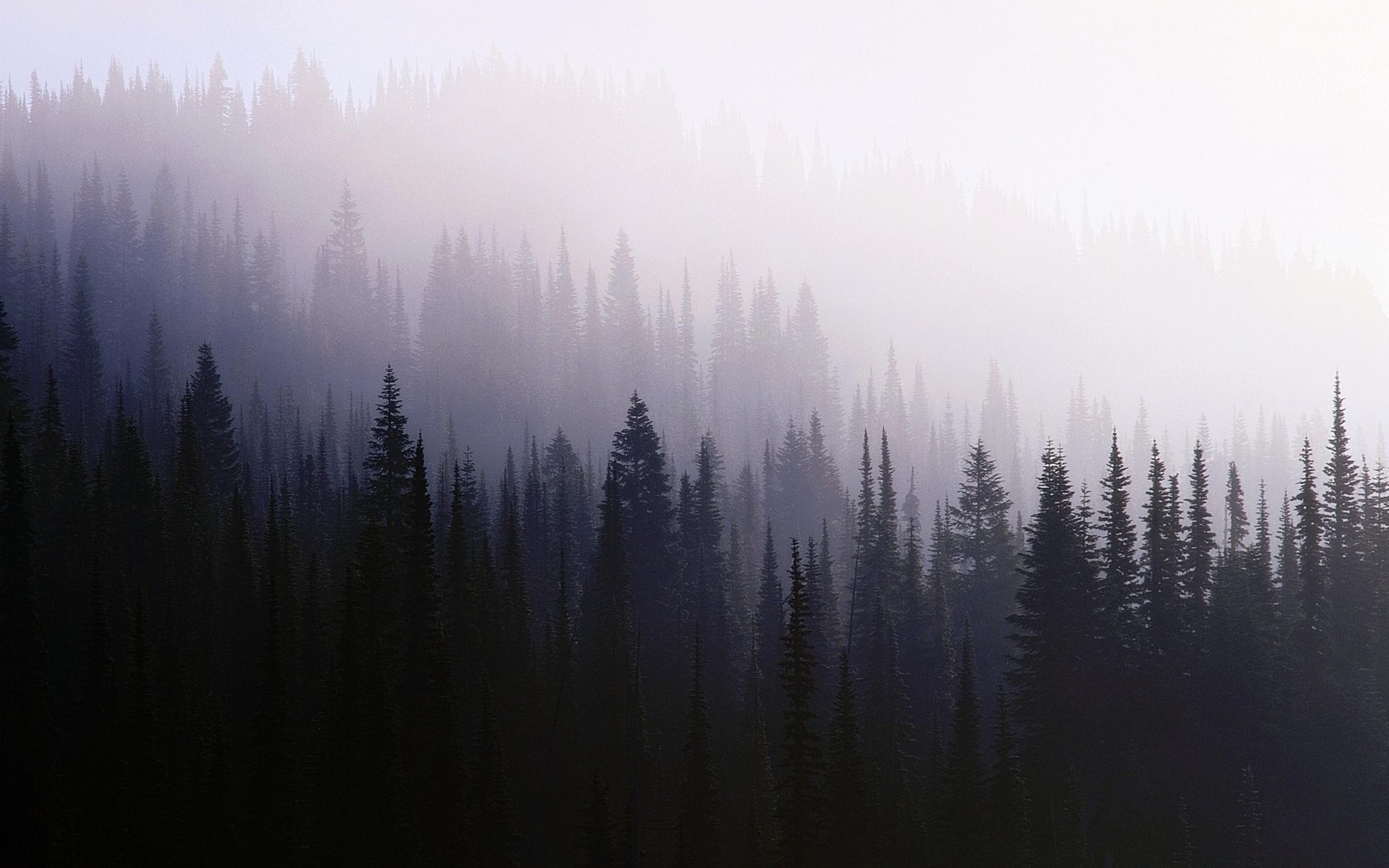 Дед в тумане  № 1843019 без смс