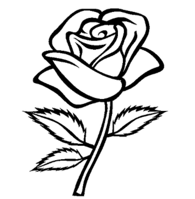 сожалеем, рисунок розы картинки компьютере