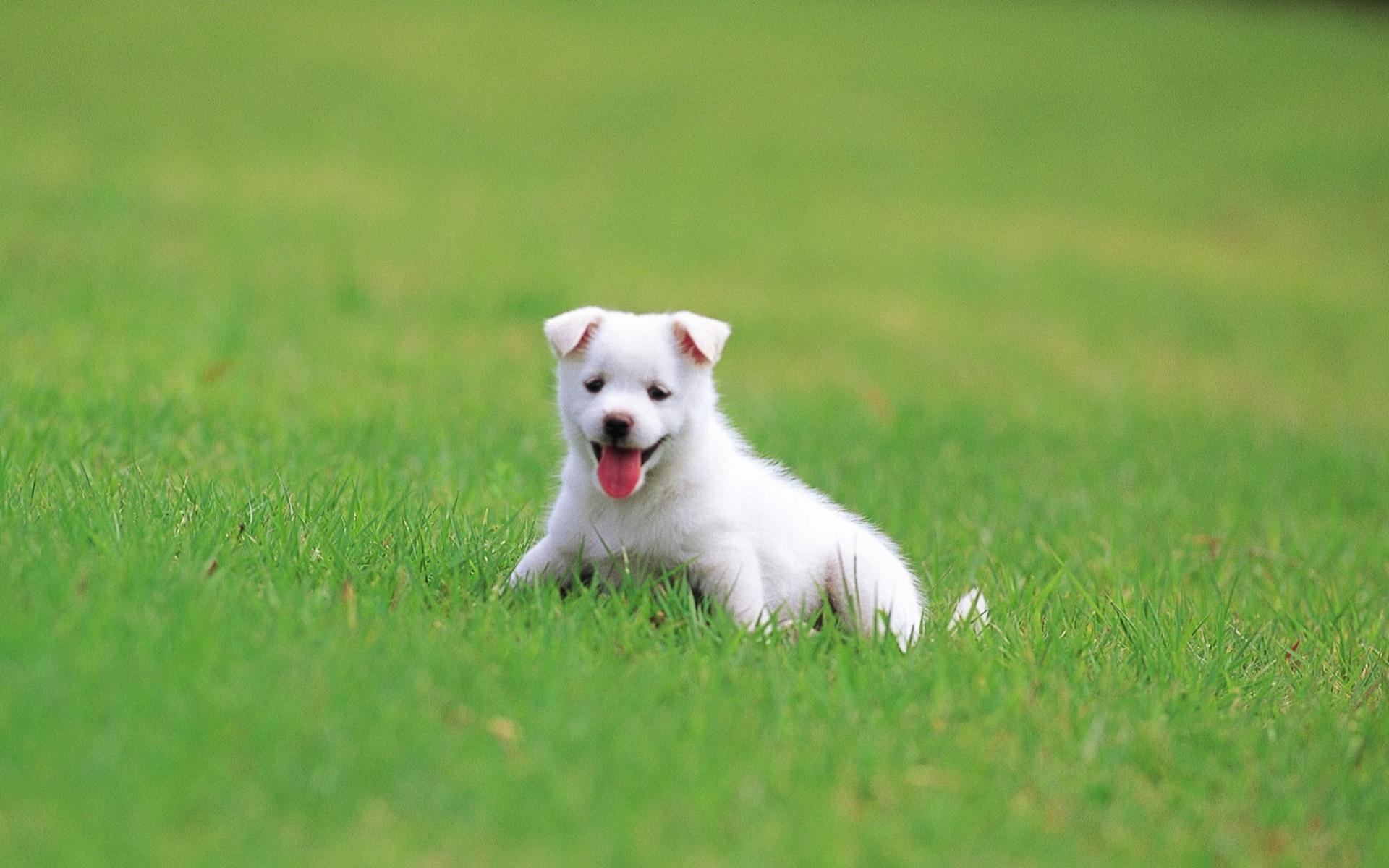 пес на лужайке загрузить