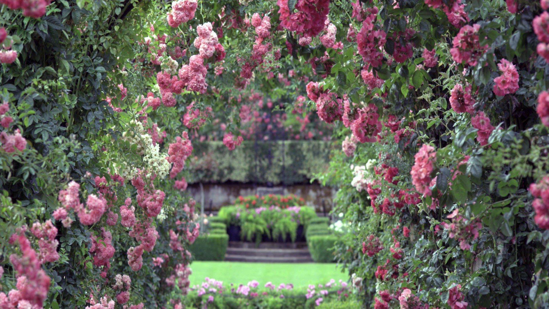 сад цветы дорожка на телефон