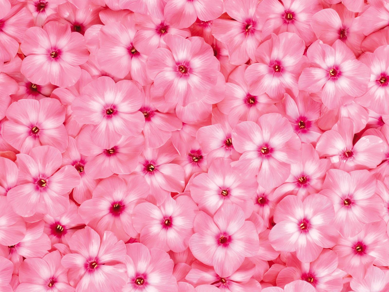 процессе красивый фон с цветочками картинка наше