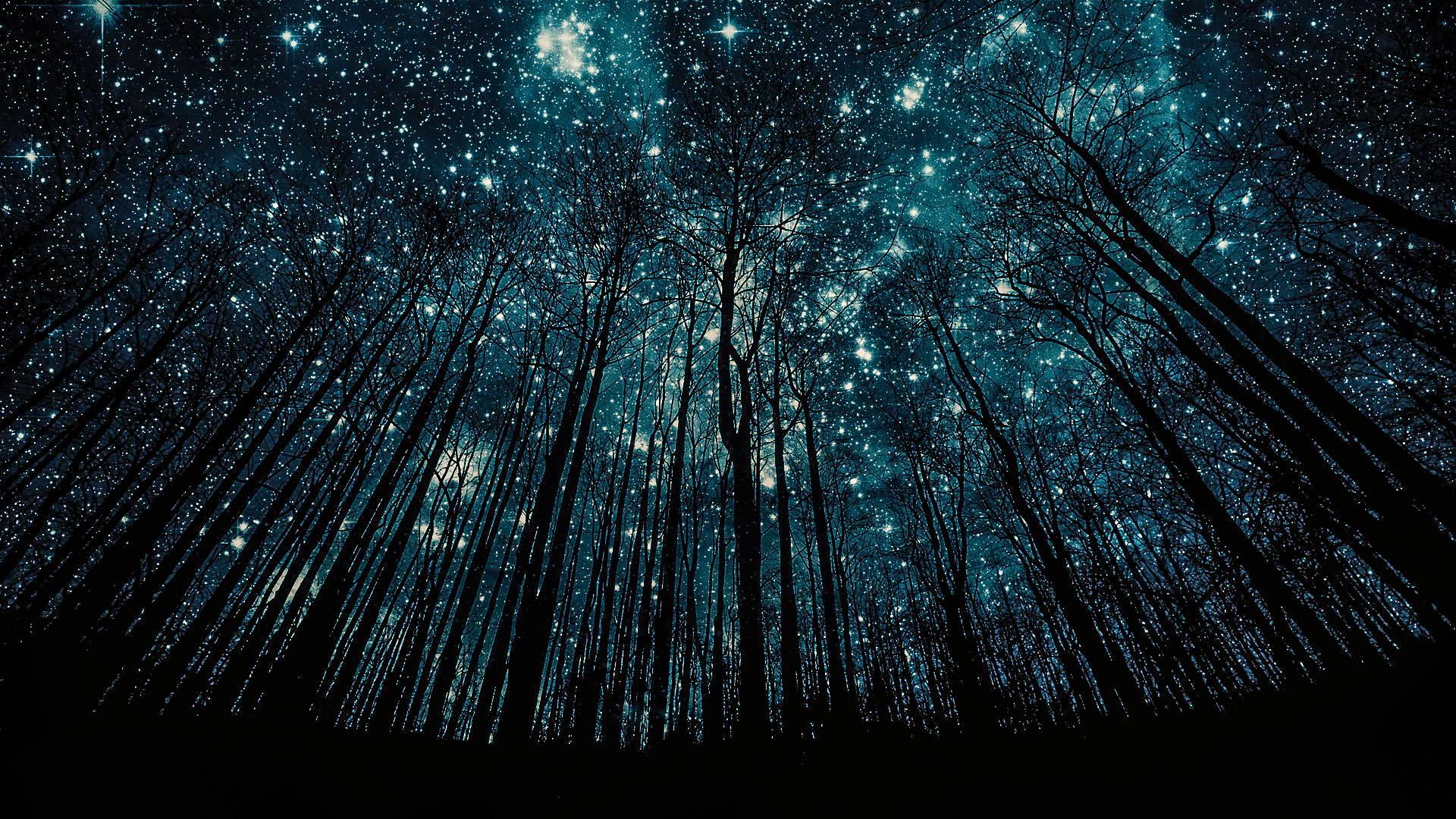 как фотографировать звездное небо и лес