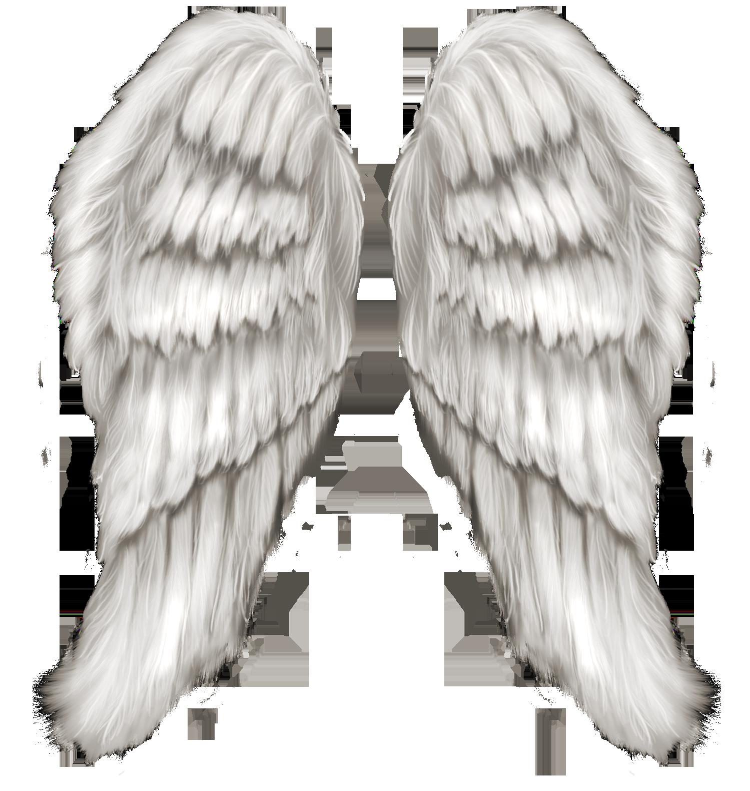 Картинки ангельских крыльев без фона