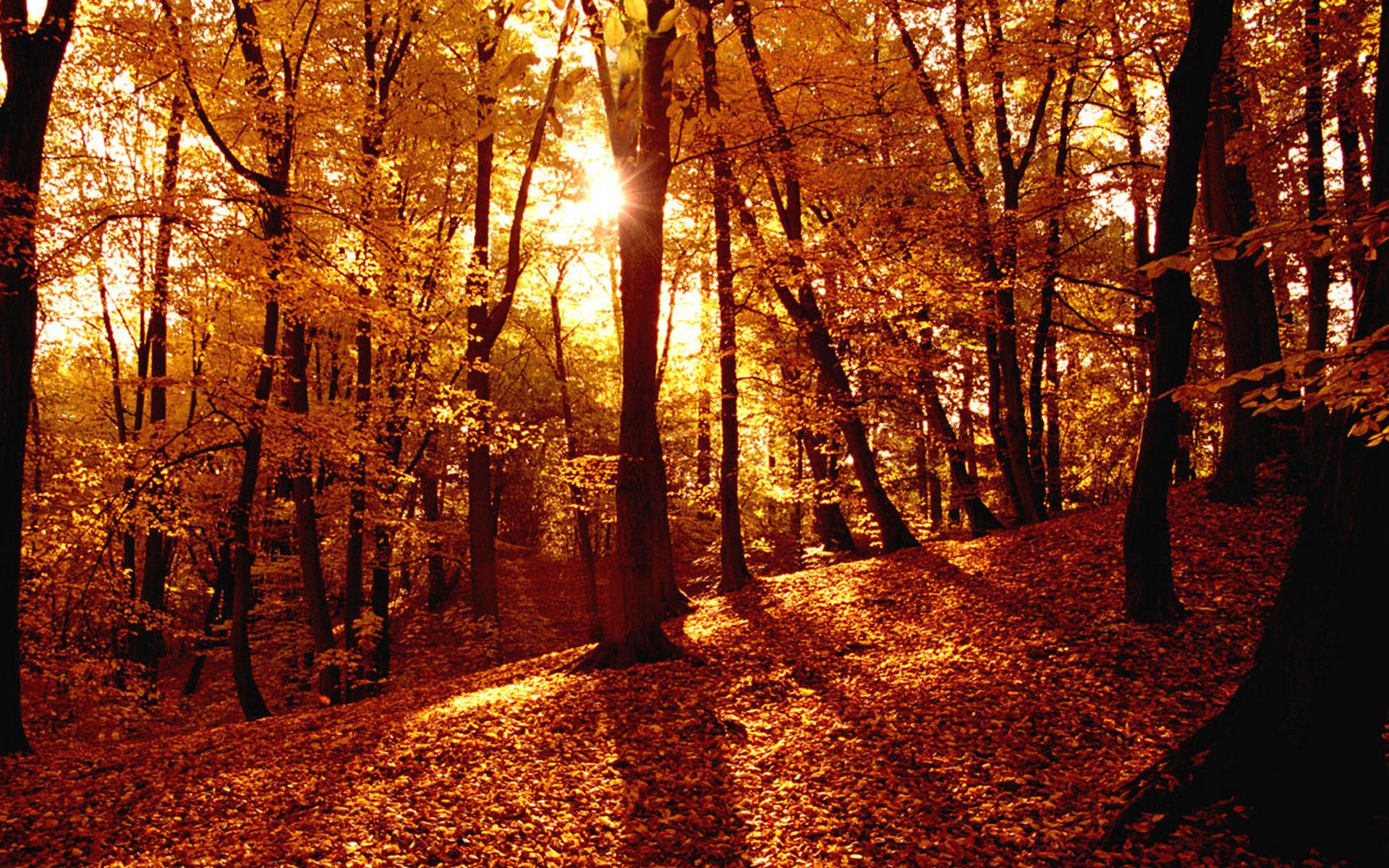 Картинки в тему осень