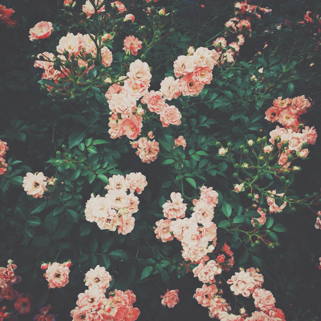 Низкорослые многолетние бордюрные цветы
