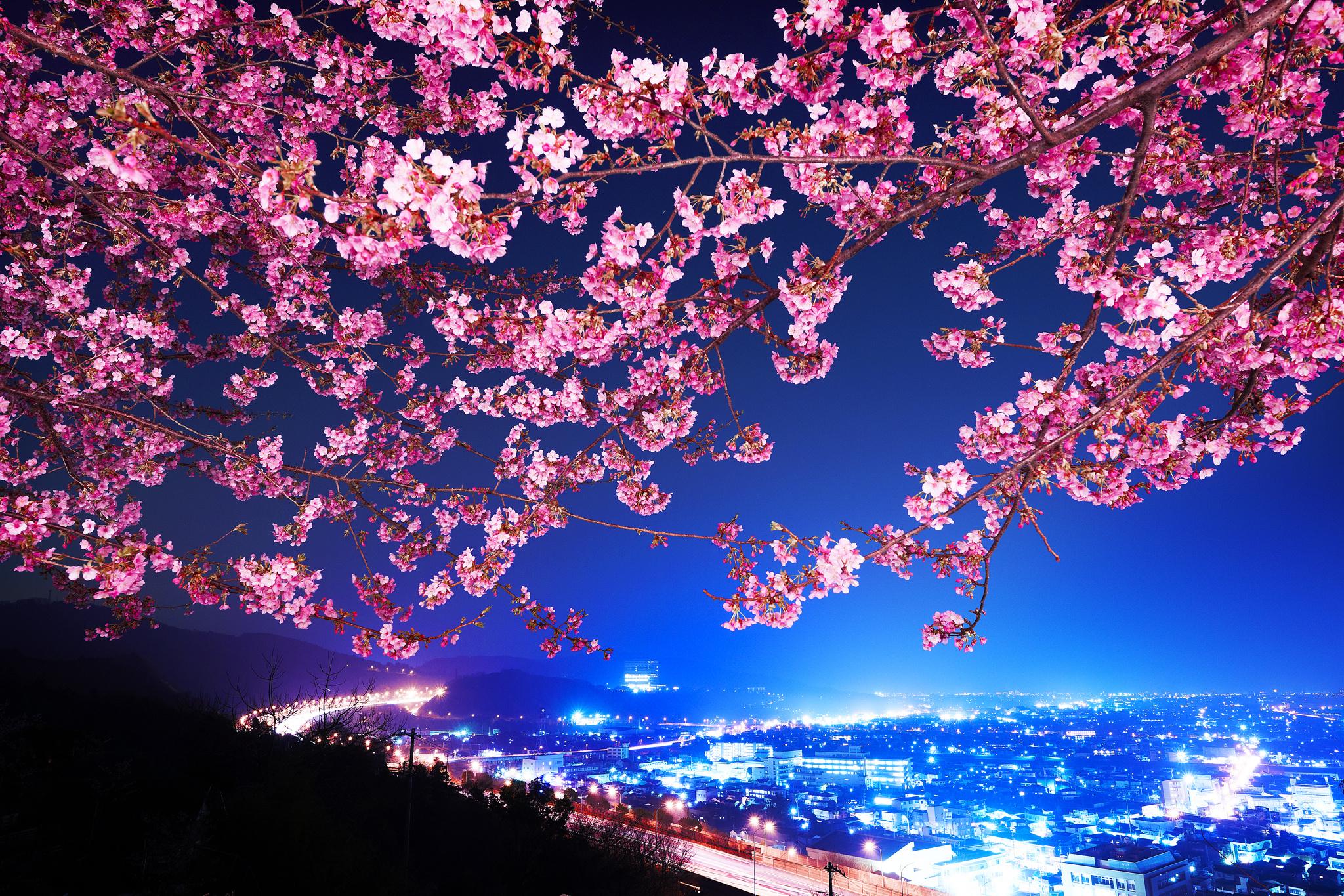страны архитектура природа деревья ночь  № 3716928 без смс