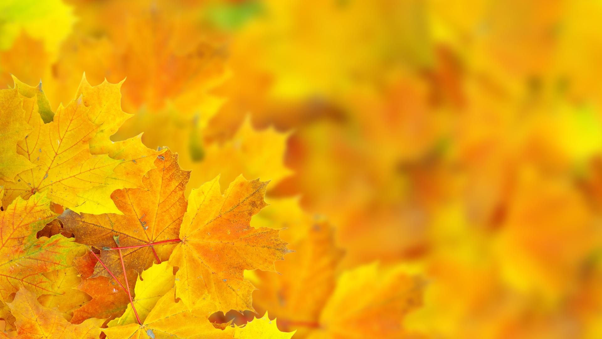 желтые листья скачать