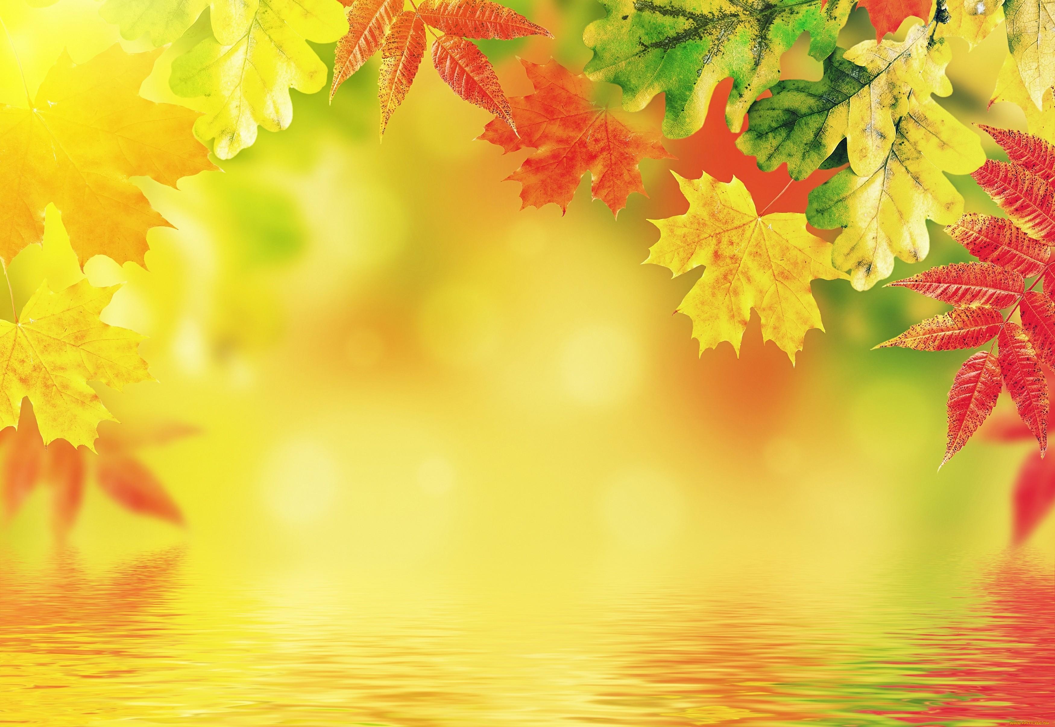 Текстура Осень 4 Avatan Plus
