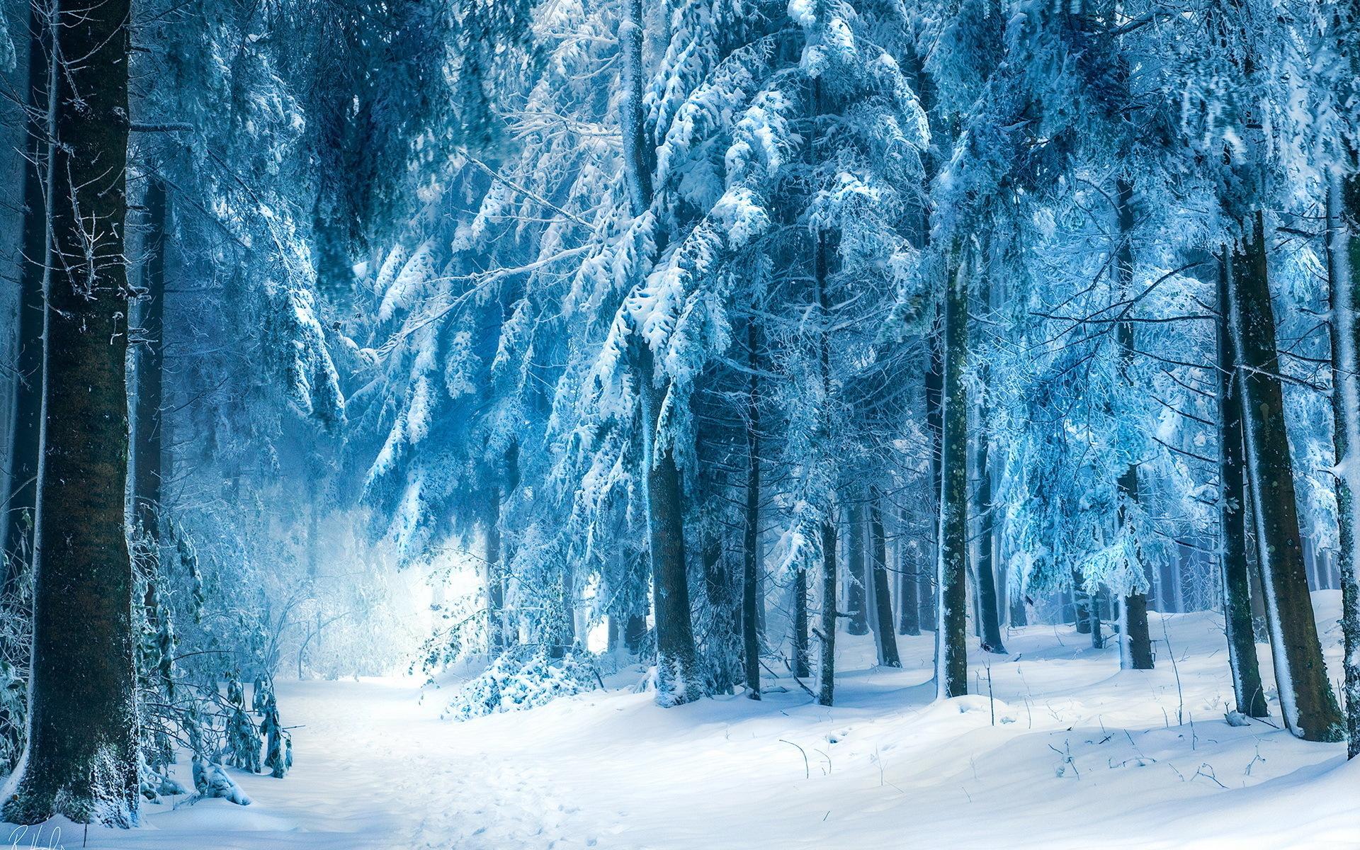 сочи костюме заснеженный лес фотообои многие читателей