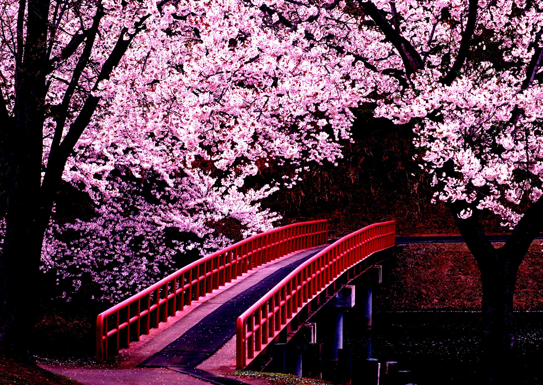 ней картинки весны в японии природой