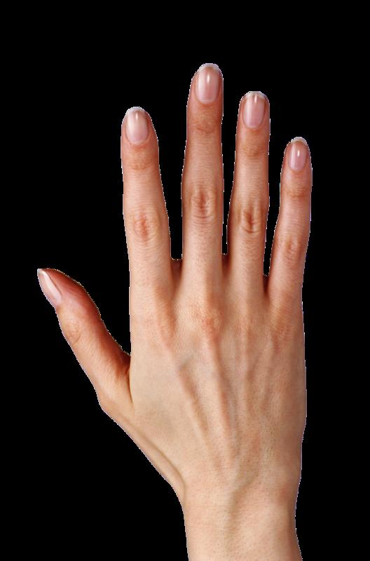 Рука на белом фоне картинки