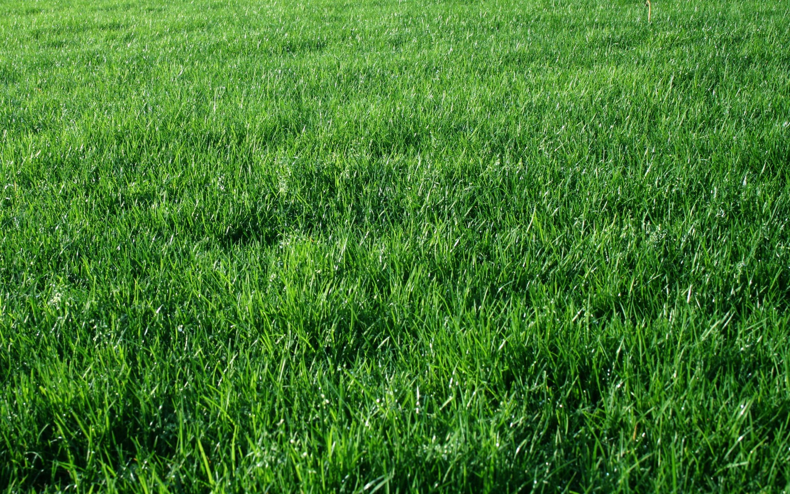 трава текстура  № 1309911 загрузить