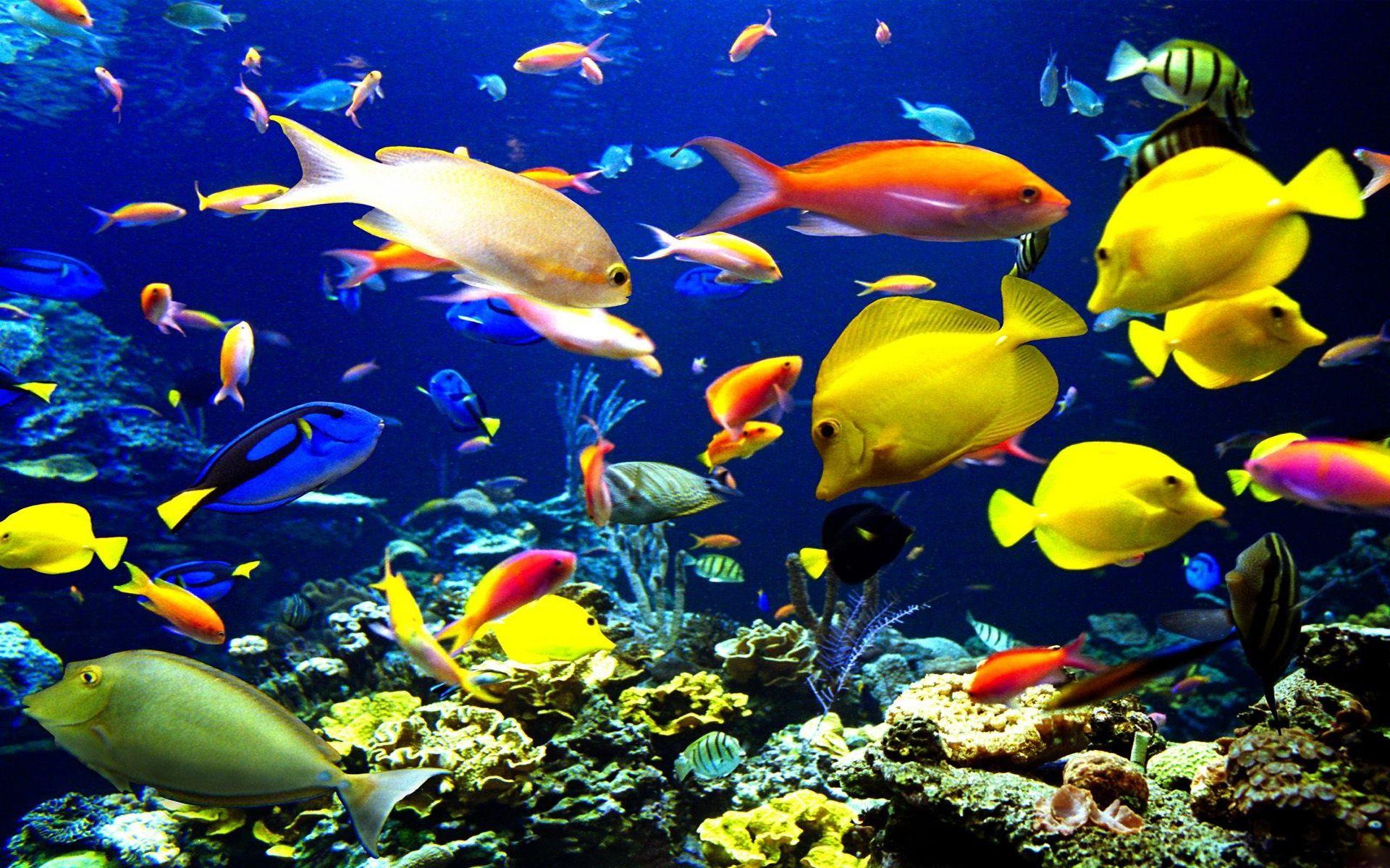 смотреть картинки рыб в море был один наиболее