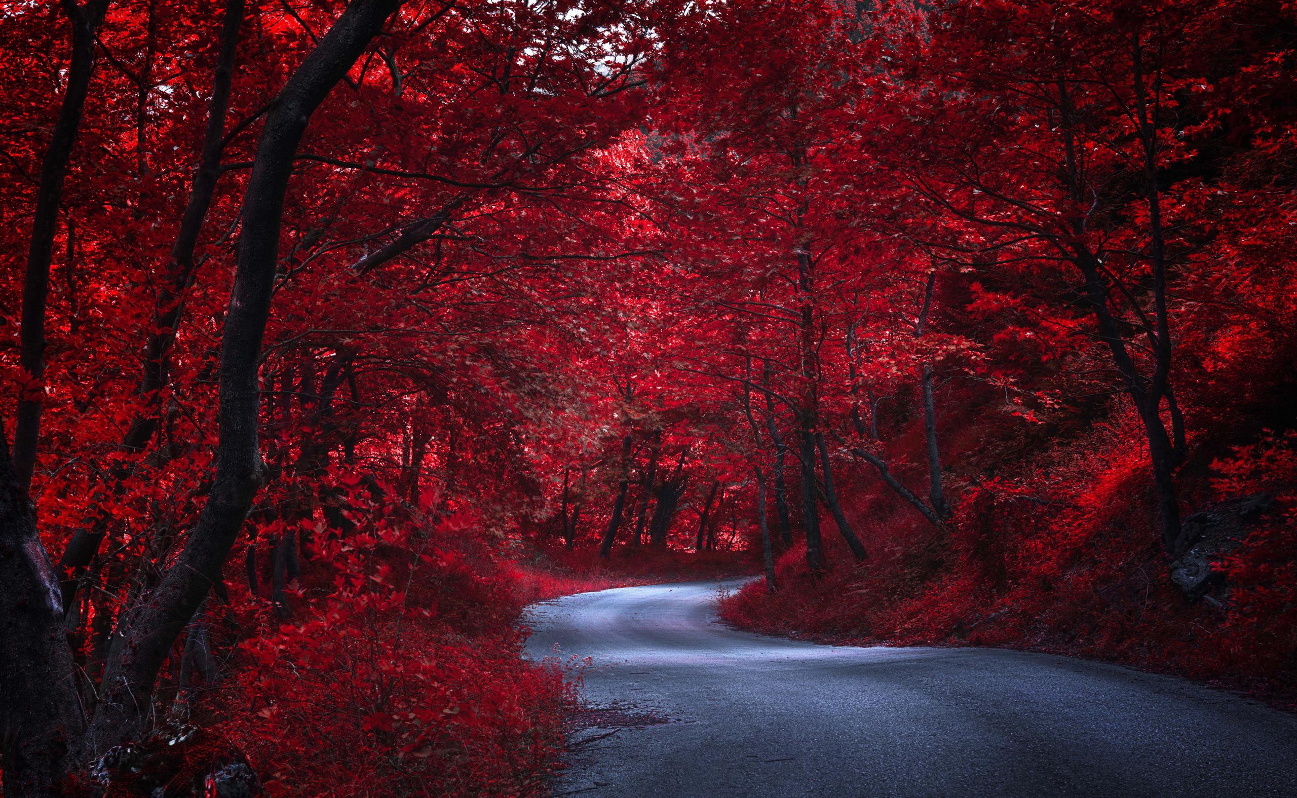 красные деревья загрузить