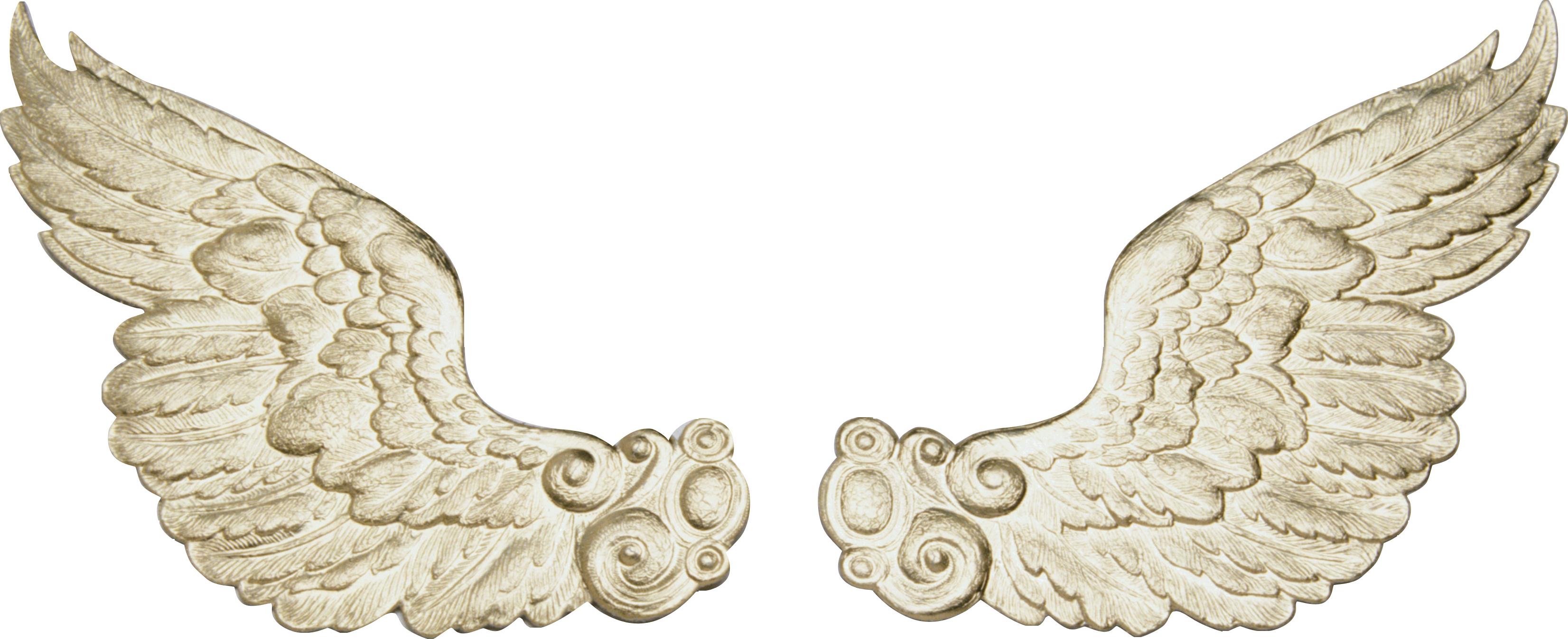 рисунок анимационная картинка крыла через микроскопические поры