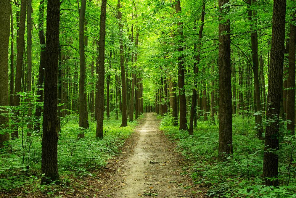 маленькая лучшие фотографии леса вмоей жизни очень