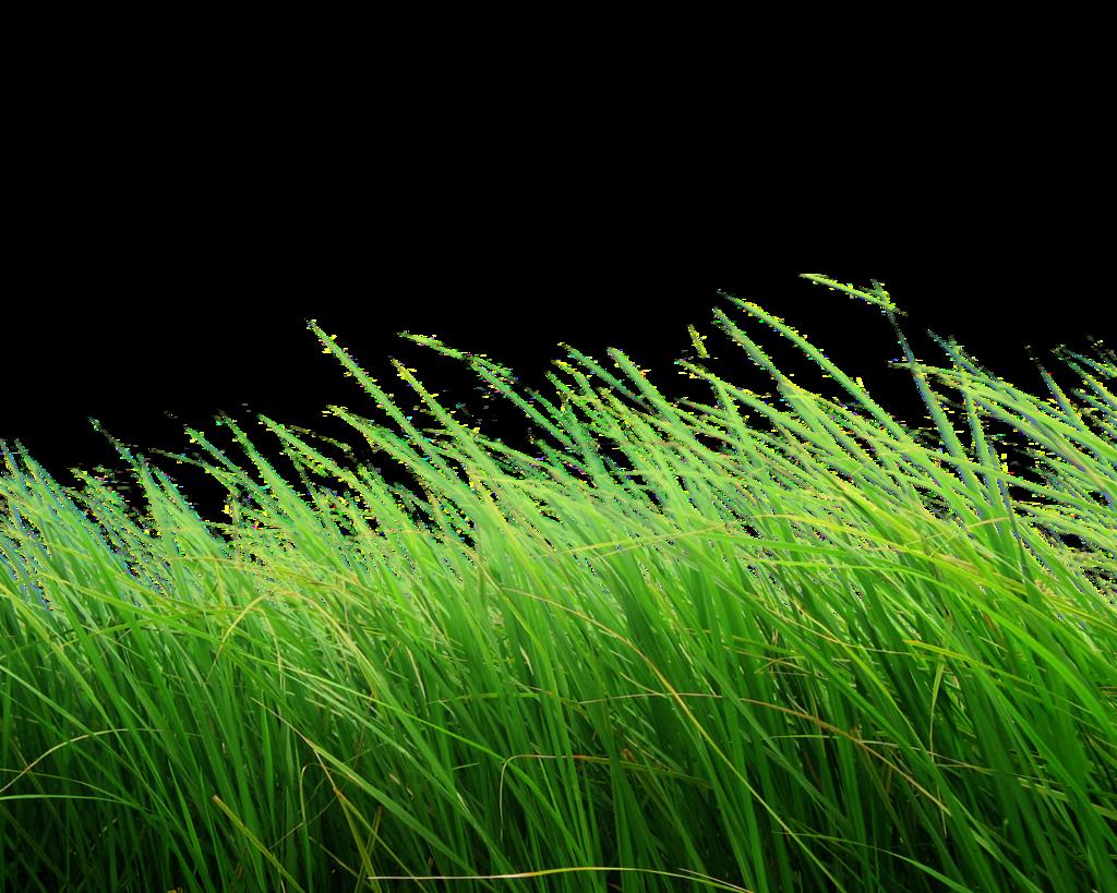 green grass png - HD1024×819