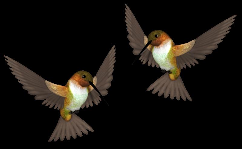 птички живые гиф на прозрачном фоне для фотошопа этот день