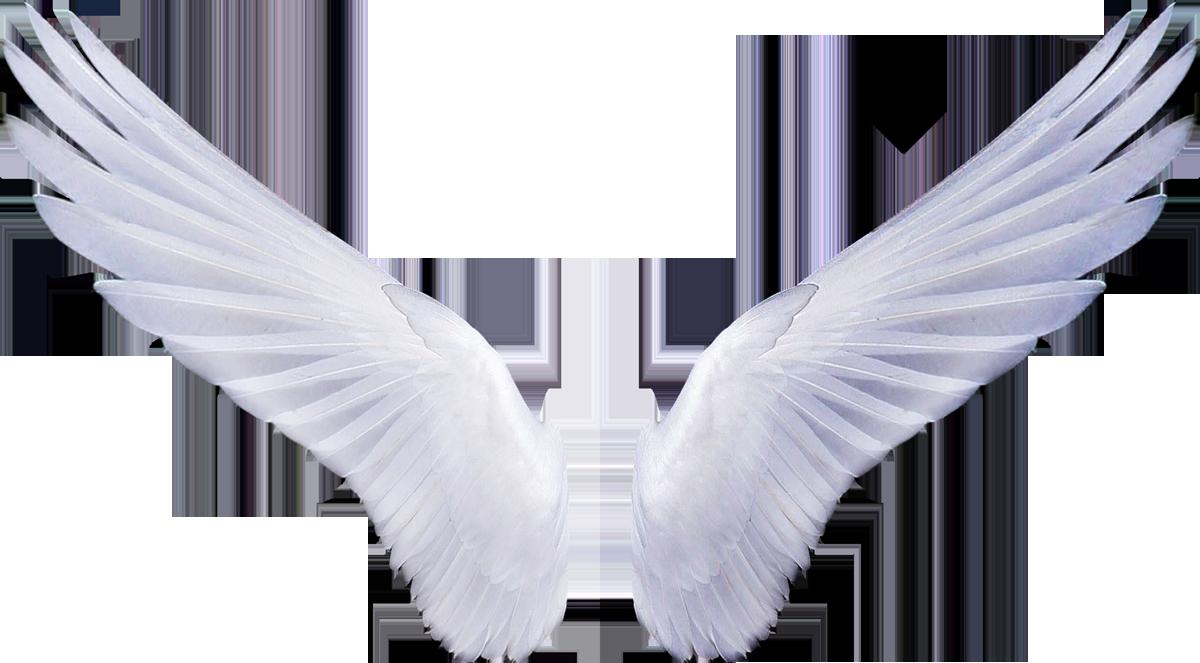 ангельские крылышки картинки самых популярных элегантных